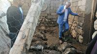 Van'da ikinci sel felaketi: 900 hayvan telef oldu