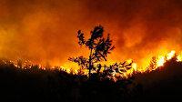 Orman Genel Müdürü Karabey: Son altı günde 134 yangın kontrol altına alındı 10 yangın sürüyor