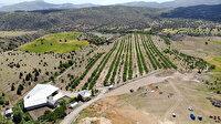 İstanbul'u terk etti: Köyüne dönerek bin 300 dönümlük araziye 28 bin ceviz ağacı dikti