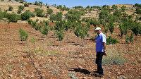 Hobi amaçlı üretim için aldı: Şimdi 61 çeşit meyve yetiştiriyor