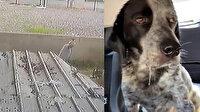 Civcivlerini kovalayan köpeği sopayla öldüresiye dövdü