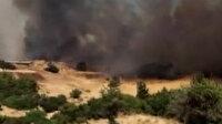 İzmir Foça'da orman yangını: Yangına havadan ve karadan müdahale ediliyor