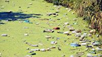 Edirne'nin Bayır Deresi kirlilikten yeşile büründü: Eskiden burada balık tutuyorduk bu hali utanç verici