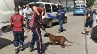 Pendik'te denizde pitbull dehşeti: Köpek barınağa götürüldü