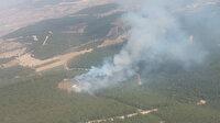 İzmir'in Foça ilçesinde orman yangını çıktı