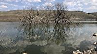 Baraj suyu çekildi ağaçlar ortaya çıktı