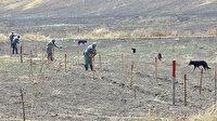 Azerbaycan'ın işgalden kurtarılan kentlerinde 10 aydır karış karış mayın temizliği yapılıyor