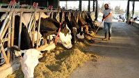 Kız kardeşleri ile besihane kurdu: Günde 800 litre süt üretiyor