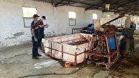 İzmir'de mide bulandıran görüntüler: Ahırda ürettikleri salçayı vatandaşa yedireceklerdi