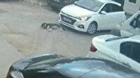 Sarıyer'de köpeği ezen sürücünün rahat tavırları pes dedirtti