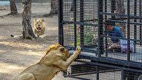 Antalya'da telli kamyonetle aslan safarisine tepki