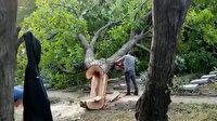 Şehitlikteki ağaçları kesen İBB ekipleri tepkiler sonrası motorlu testereleri bırakıp hızla uzaklaştı