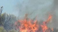 Aydın'da makilik ve zeytinlik alanda yangın çıktı
