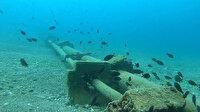 Kızıldeniz'den Akdeniz'e gelen istilacı balık türleri yönünü Ege Denizi'ne çevirdi