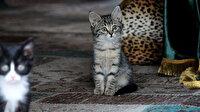 Kedi sevgisiyle bilinen 'Pisili Baba' merhametiyle yüzyıllardır dillerde