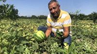 Karpuz üzdü salatalık güldürdü: 50-60 bin lira zarar ettiğini söyleyen üretici salatalıktan umutlu