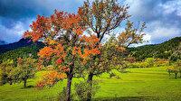 Şavşat'ta sonbaharın gelişi kartpostallık manzaralar oluşturdu