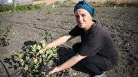 İstanbul'un kalabalığından sıkılıp geldiği yerde yetiştirmeye başladı: Talep yağıyor bize sürpriz oldu