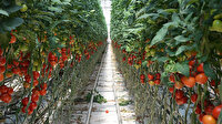 BİM domates üreticisini 51 milyon TL'ye satın aldı