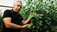 Yaylada hasat süresi uzadı: Domatesin fiyatı cep yakıyor