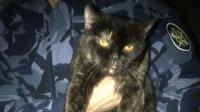 Hapishanede uyuşturucu kuryeliği yapan kediye suçüstü