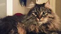 Mahkemeden 'kedilerin velayeti' davasında emsal karar: 'Piraye' ve 'Cingöz'ün psikolojisi gözetildi