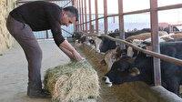 Muhtar TKDK'dan aldığı destek ile köyünü tavuk ve besi çiftliğine döndürdü: Hayal bile edemezdik