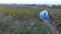 Yeniden yeşeriyor: Kızılırmak Deltası'nda yanan alanlar bir yılda doğal yapısına kavuştu