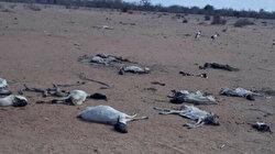'Drought more dangerous than pandemic in Kenya'