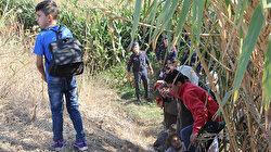 Mısır tarlasında saklandılar: 50 düzensiz göçmen yakalandı