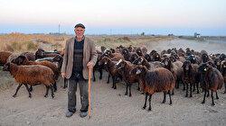 مع حلول الشتاء.. الرّحل يبدؤون رحلة النزول من الجبال شرقي تركيا
