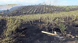 Manisa'da orman yangını: 50 dönüm alan zarar gördü