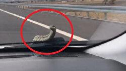 Bursa'da otomobilin kaputundan çıkan yılanı bulamıyorlar