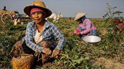 Less than half of women participate in labor market: UN