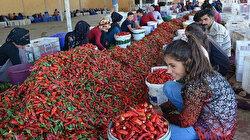 تركيا تصدر مسحوق الفلفل الحار إلى 107 دول في 2020