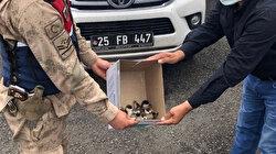 Yavru angut kuşlarını sosyal medyada satarken yakalandı: 8 bin lira ceza kesildi