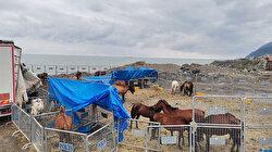 TIR dorsesinde ölüme terk edilen atların sahibine 35 bin lira para cezası
