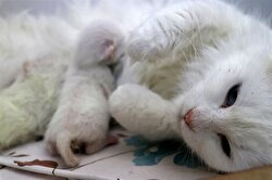 With this program a cat gave cesarean birth to three healthy kittens.