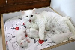 Kaya also stated that they mobilized all resources for feline mothers.