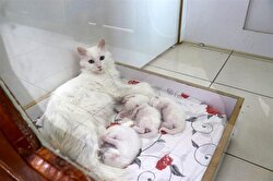 Cat cesarean sections cost approximately 500 Turkish Liras.