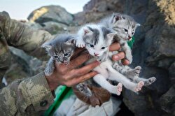 Cats accompany soldiers at military base