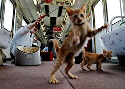 A Japanese civic group teamed up with a railway operator on Sunday to let some 30 cats roam on a local train at an event, hoping it will raise awareness of the culling of stray cats.