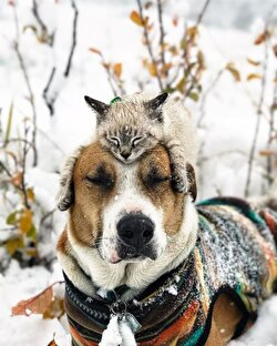 Cat and dog travel the world together