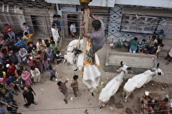 A Pakistani breeder used a crane to bring down his animals from a rooftop ahead of Muslim's Eid al-Adha in Karachi, Pakistan. Due to the crowded population, agricultural land scarcity and irregular urbanization in Karachi, people sometimes keep their animals on their roofs.