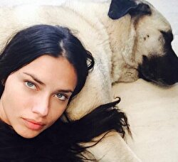 News of top model Adriana Lima adopting a second Kangal dog, a large furry breed local to Turkey's Sivas province, in her Los Angeles home last year in July, has thrilled Turkish breeders, who say they are happy to gift the famous beauty her third Kangal.