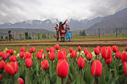Tulips are seen inside Asia's largest Tulip Garden after it opens for general public and tourists in Srinagar, Kashmir, India on March 25, 2021. Over 15 lakh flowers of more than 64 varieties will be in bloom in the garden and Indian prime minister Narendra Modi in a tweet has appealed people to visit Jammu and Kashmir and experience hospitality of people.