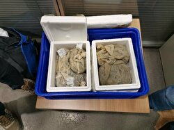 Turkish officials discovered a Kyrgyz national trying to smuggle 3,300 live medicinal leeches (Hirudo Verbana) out of Turkey in their suitcase at Sabiha Gökçen Airport. They were fined over 50,000 Turkish liras, while the leeches were set free to wiggle as they please.