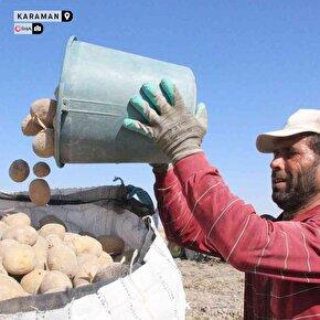 Patates hasadı böyle başladı: 15 bin ton rekolte bekleniyor