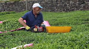 ÇAYKUR benzinle çalışan hasat makinelerinin kullanımını yasakladı: Çayda gaz kalıntısı bırakıyor