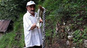 Karadeniz'de öldürücü zehirli yılan korkusu: Kalın kıyafet ve bot giyerek bahçelere girin